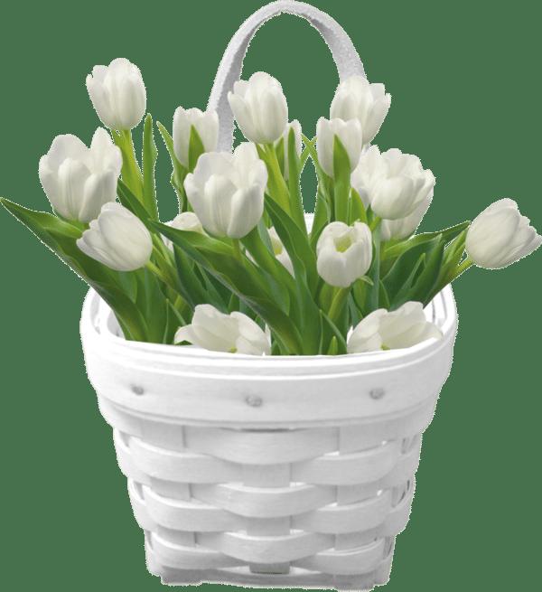 Wild Stems Florist Flower-Clipart-Basket-of-White-Tulips